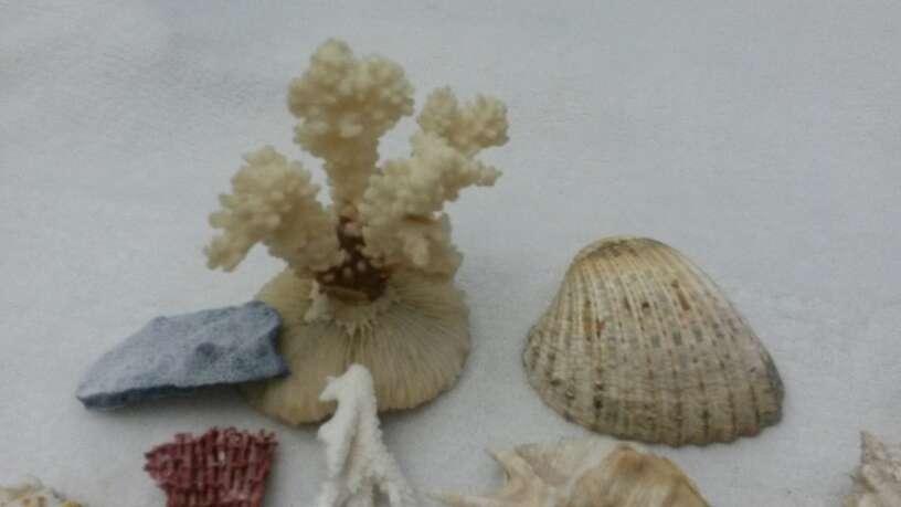 Imagen producto Lote surtido de conchas y caracolas de mar 3