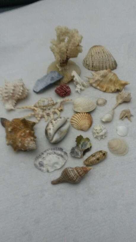 Imagen producto Lote surtido de conchas y caracolas de mar 2
