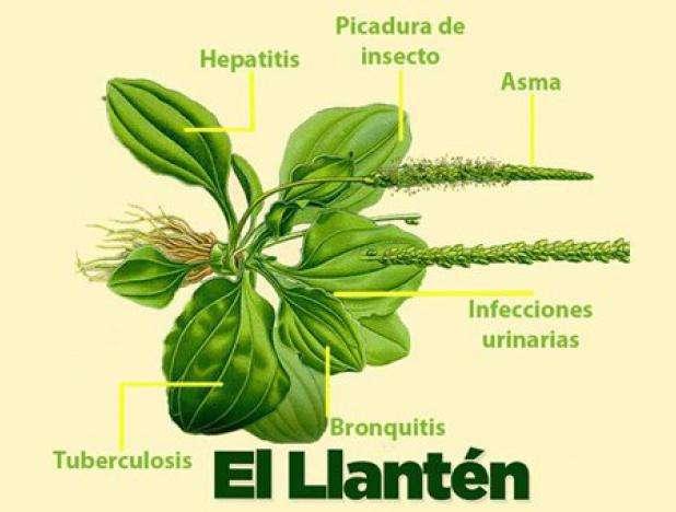 Imagen venta de plantas secas