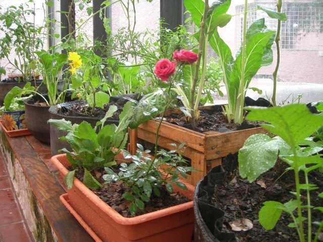 Imagen producto Abono ecológico  2