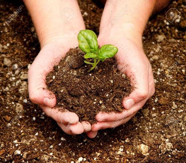 Imagen producto Abono ecológico  5