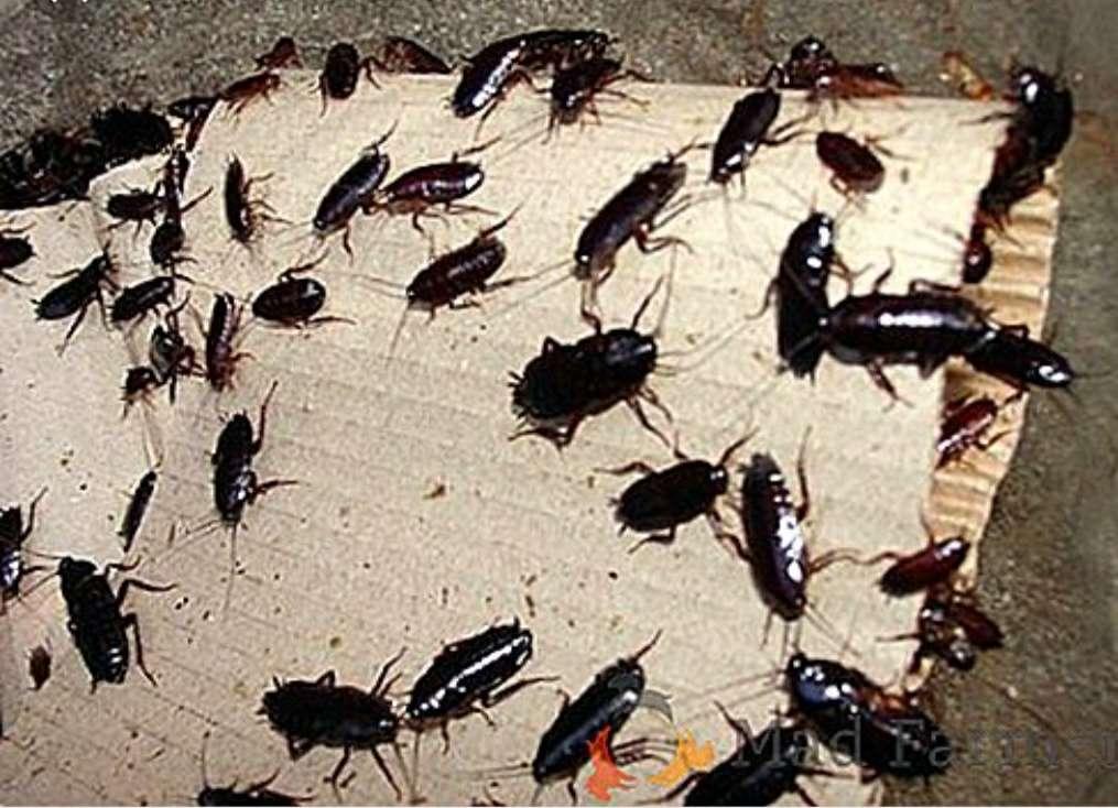 Imagen Cucarachas(contro de plagas)