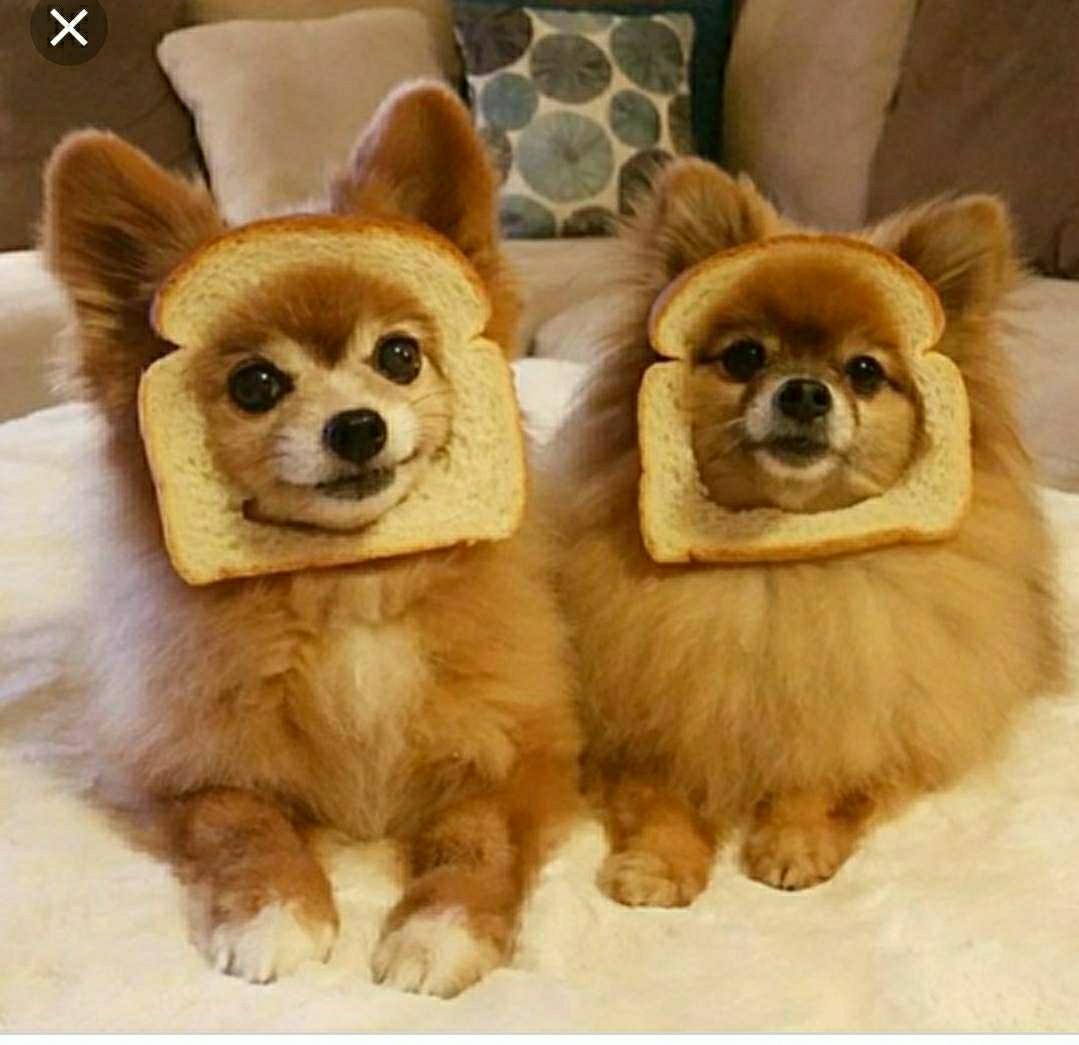 Imagen producto Paseadora de perros  1