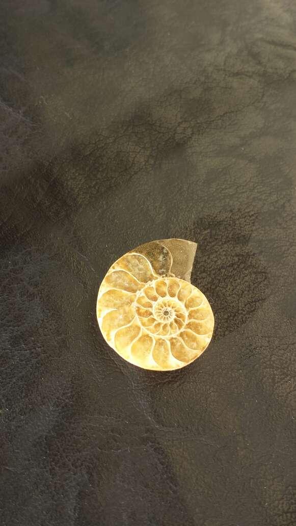Imagen producto Fósil petrificado  2