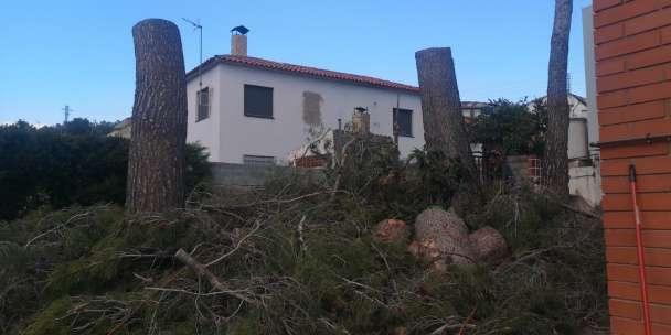 Imagen producto Poda y Tala de pinos, limpieza de parcelas 2