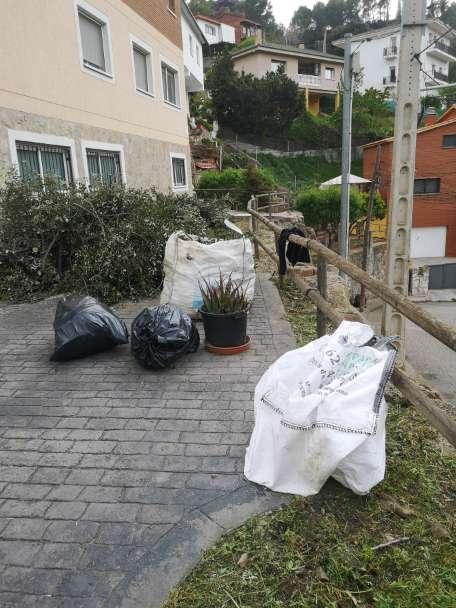 Imagen producto Poda y Tala de pinos, limpieza de parcelas 4