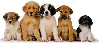 Imagen producto Paseo perros 3
