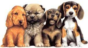 Imagen producto Paseo perros 2