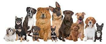 Imagen producto Paseo perros 1