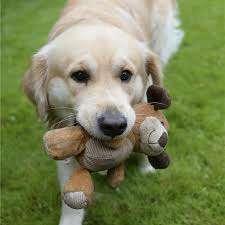 Imagen producto Paseo perros 9