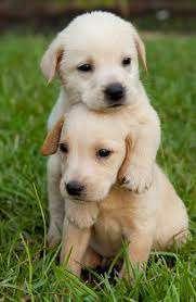 Imagen producto Paseo perros 8