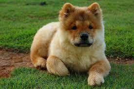 Imagen producto Paseo perros 7