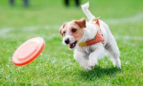 Imagen producto Paseo perros 10