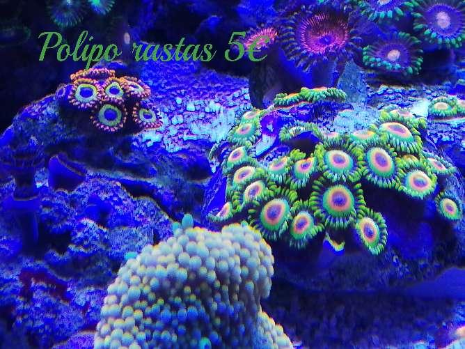 Imagen Eskejes de coral