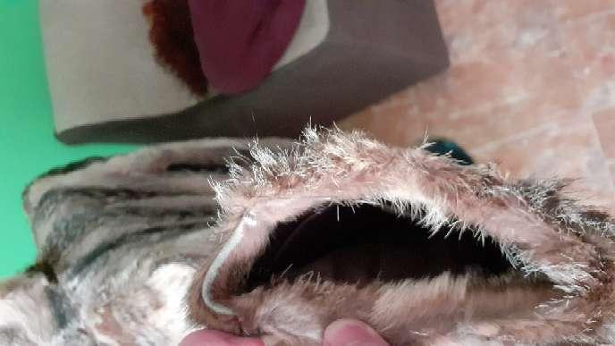 Imagen producto Chaqueta de piel de zorro auténtica.  8