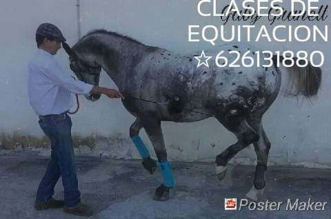 Imagen producto Equitacion y psicologia equina 2