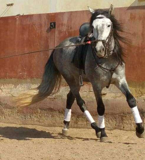 Imagen Equitacion y psicologia equina