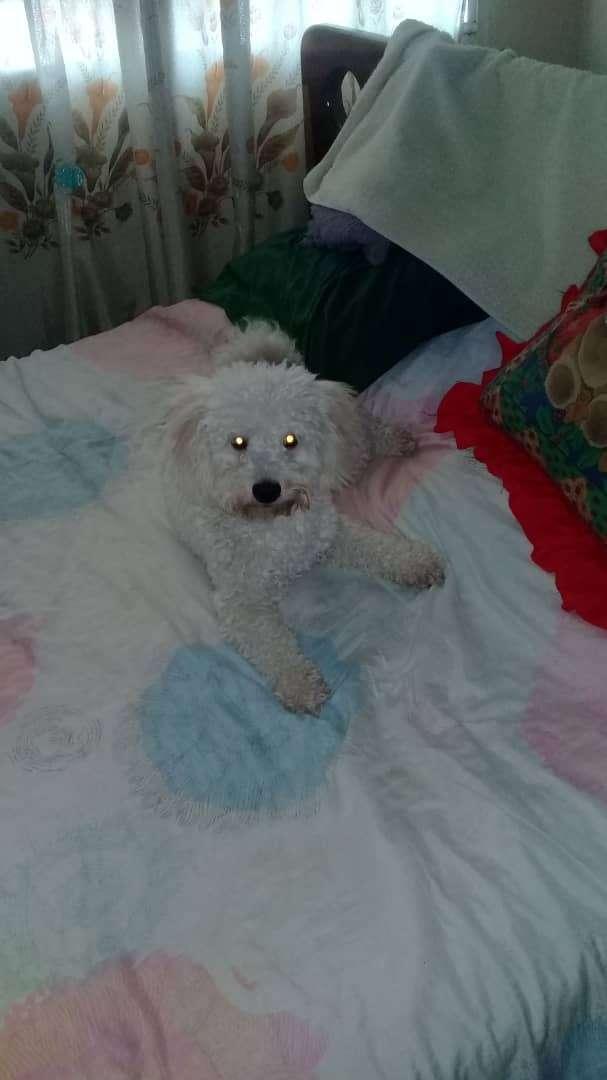 Imagen producto Cuidadora de perros 1