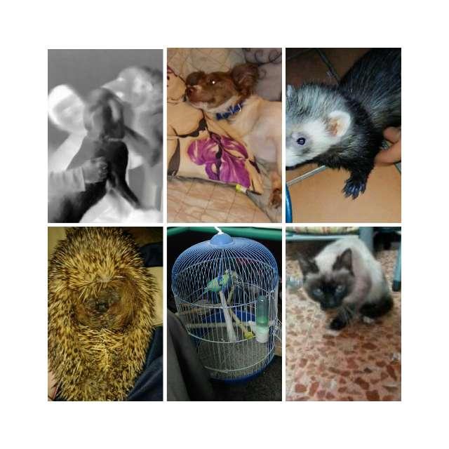 Imagen Cuidamos Mascotas De Todas Las Clases En Logroño