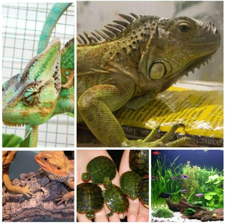 Imagen Cuidamos Mascotas , Reptiles, Anfibios ... LOGROÑO.