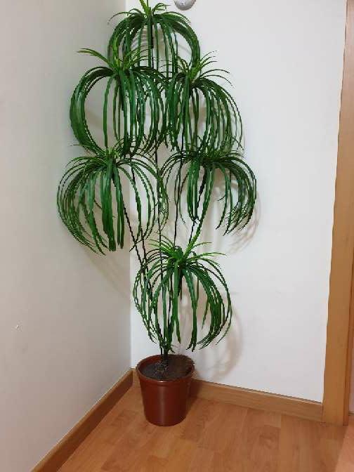 Imagen planta decorativa recogida en tienda