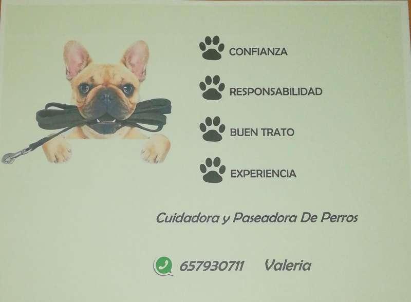 Imagen Paseadora de perros no peligrosos