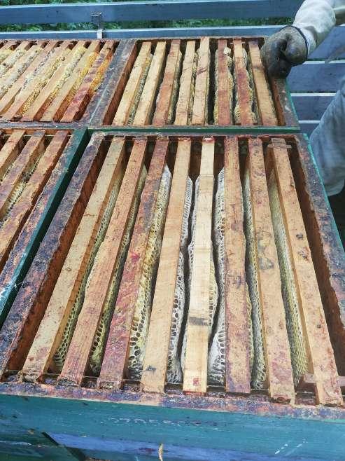 Imagen producto Miel natural botes 1 kg 2