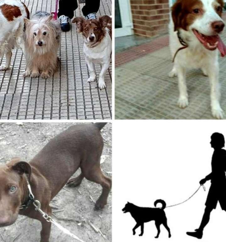 Imagen producto Cuidamos mascotas de todas las clases en Logroño. 3