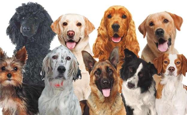 Imagen Vacaciones caninas y felinas