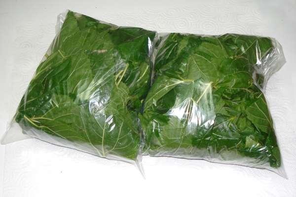 Imagen producto Bolsa de 500 grs de hojas de morera Morus Alba 3