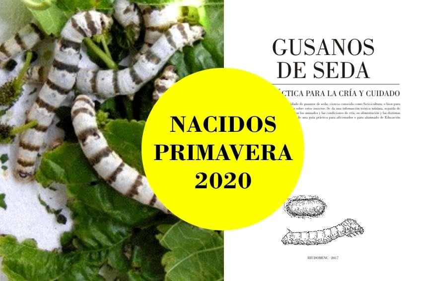Imagen Lote de 20 gusanos de seda Cebrados [nacidos] + guía práctica