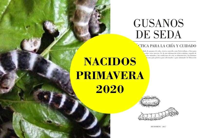 Imagen Lote de 20 gusanos de seda Egipcios [nacidos] + guía práctica