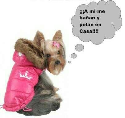 Imagen Peluquera canina a domicilio