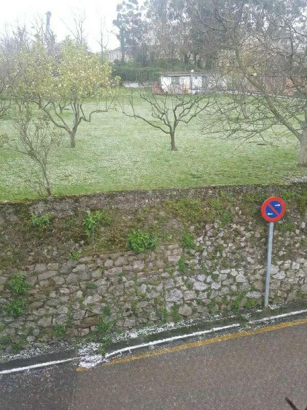 Imagen producto Limpieza de jardines 2