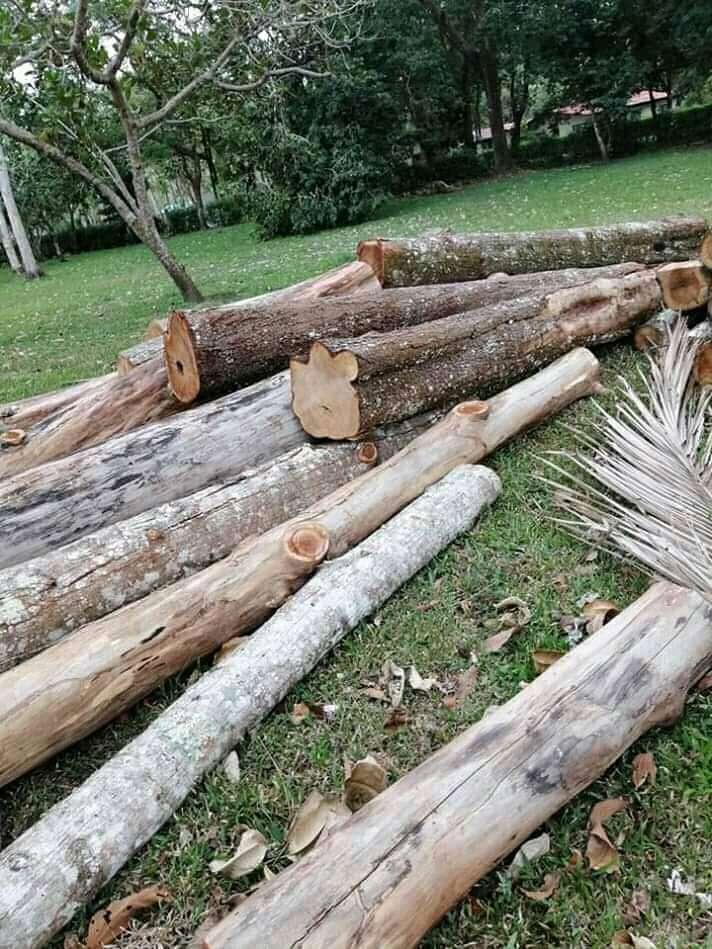 Imagen madera Balsa
