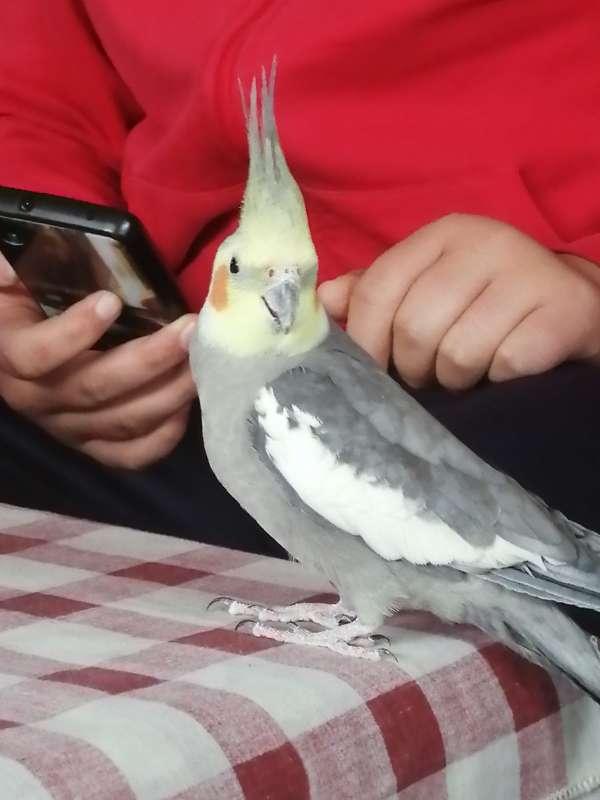 Imagen cuidó todo tipo de aves