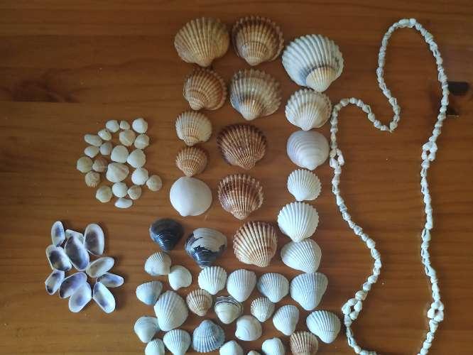 Imagen producto Conchas + collar de conchas 2