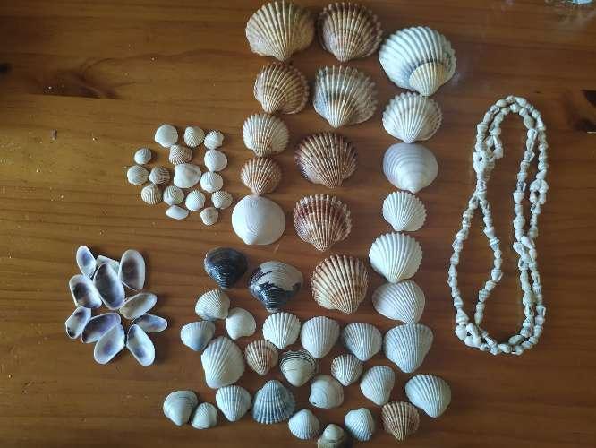 Imagen producto Conchas + collar de conchas 1