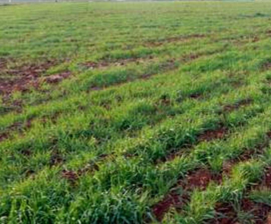 Imagen parcela terreno para siembra y cultivo se busca