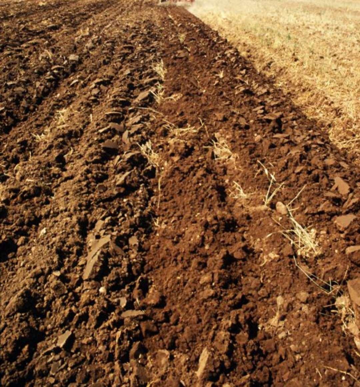 Imagen producto Parcela terreno para siembra y cultivo se busca 2