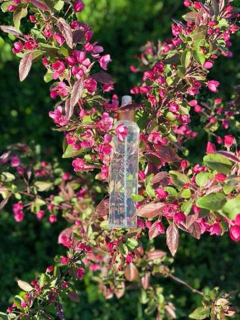 Imagen producto Perfumes frescos body Mist  2