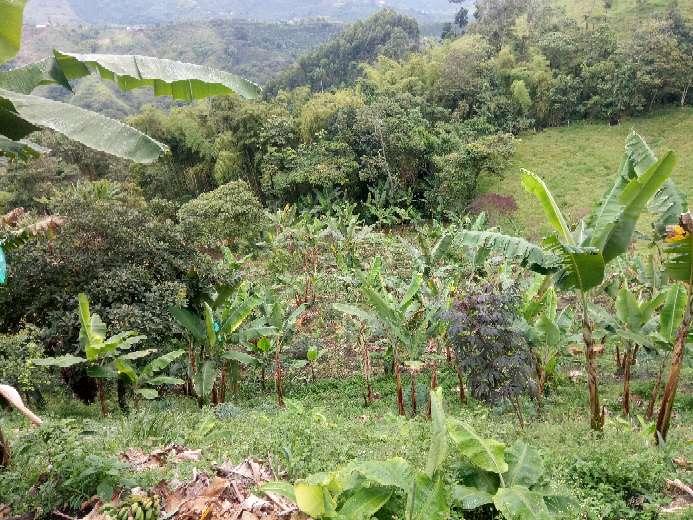 Imagen producto Vendo finca vereda el Manzanillo santa rosa de cabal Risaralda 4
