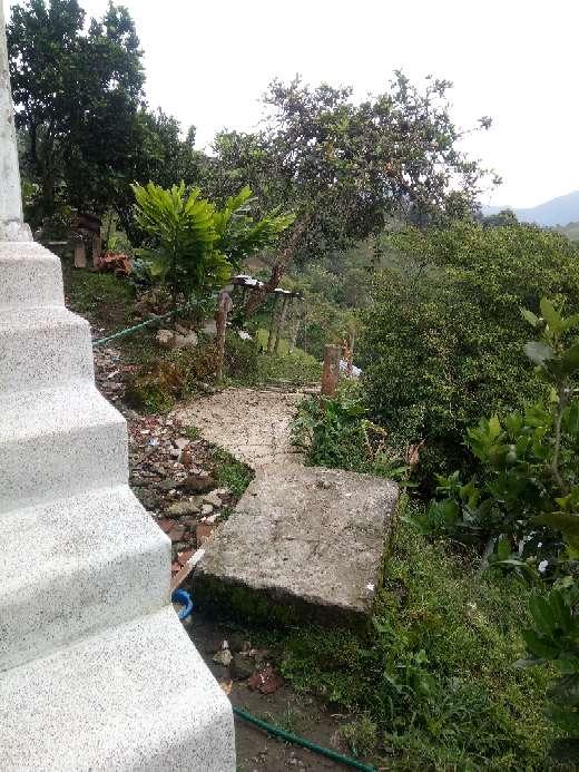 Imagen producto Vendo finca vereda el Manzanillo santa rosa de cabal Risaralda 6