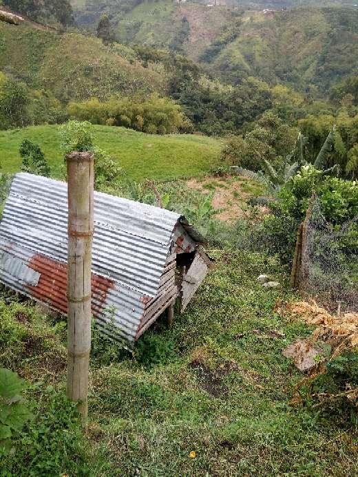 Imagen producto Vendo finca vereda el Manzanillo santa rosa de cabal Risaralda 8