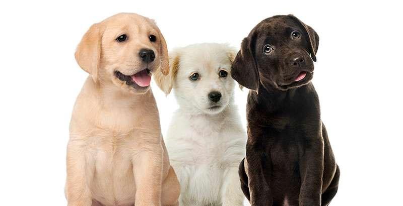 Imagen producto Paseadora canina 1