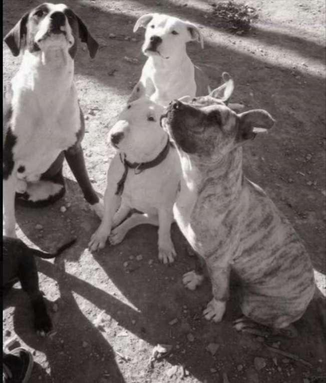 Imagen adiestradora y educadora canina con titulación oficial