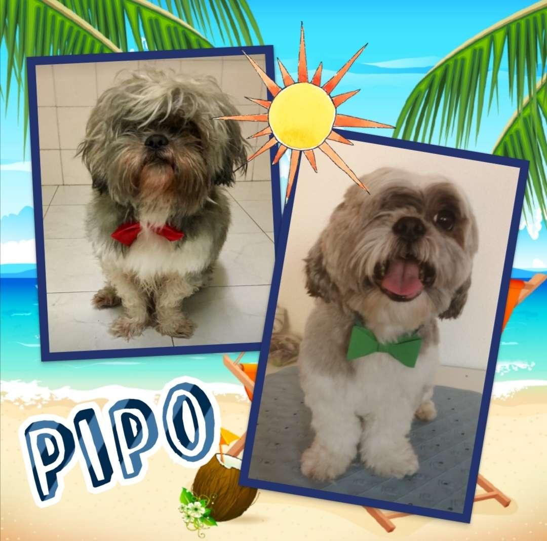Imagen producto Peluquería Canina 2