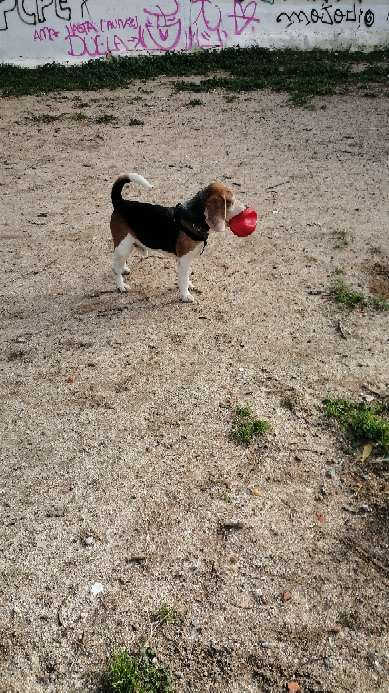 Imagen Paseo para Perros por hora