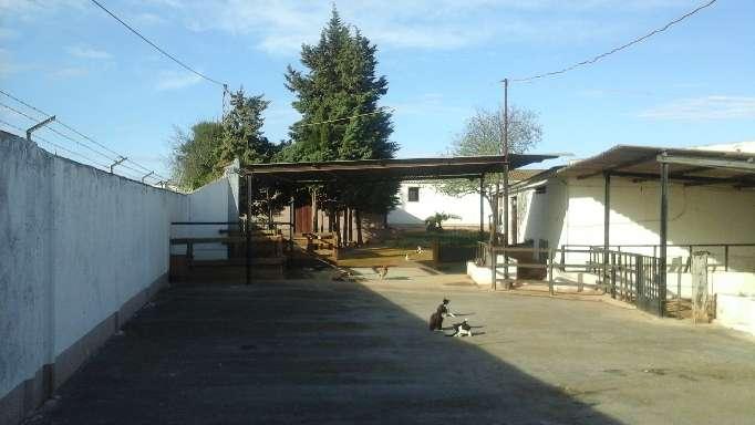 Imagen producto Finca Rustica Con Chalet - Campillos - Malaga - 1300 m2 9