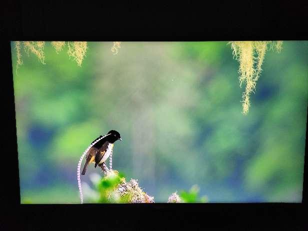Imagen Televisor Samsung Smart TV 40